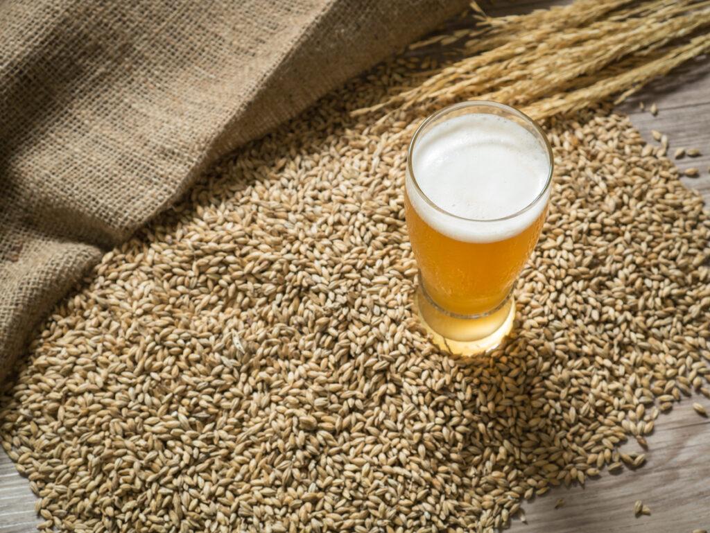 Malta de cebada para cerveza artesana y cerveza industrial.
